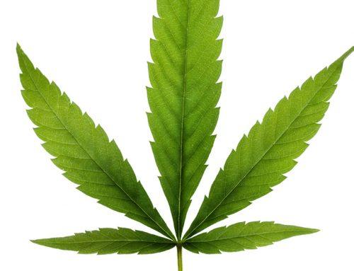 Marijuana-Related DUI in Nevada